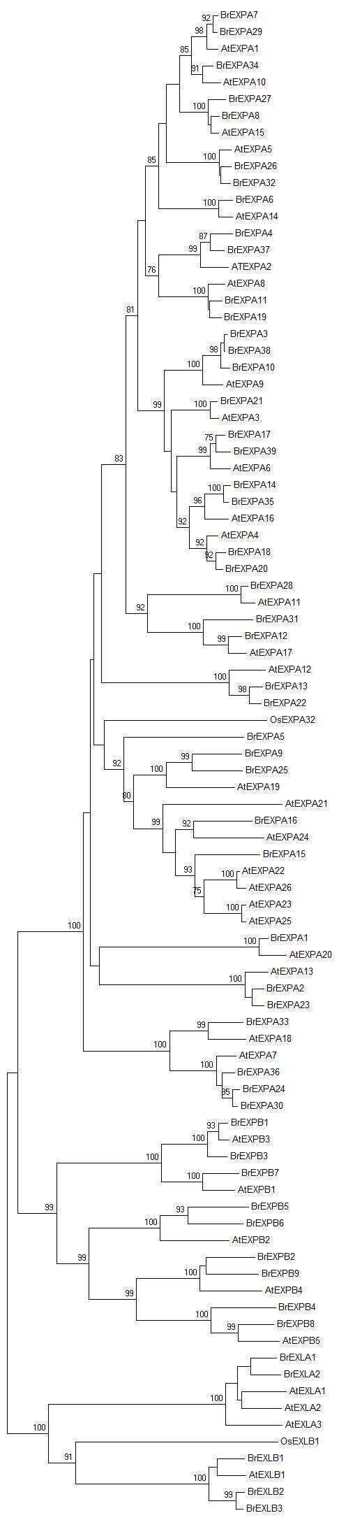 电路 电路图 电子 户型 户型图 平面图 原理图 486_2174 竖版 竖屏