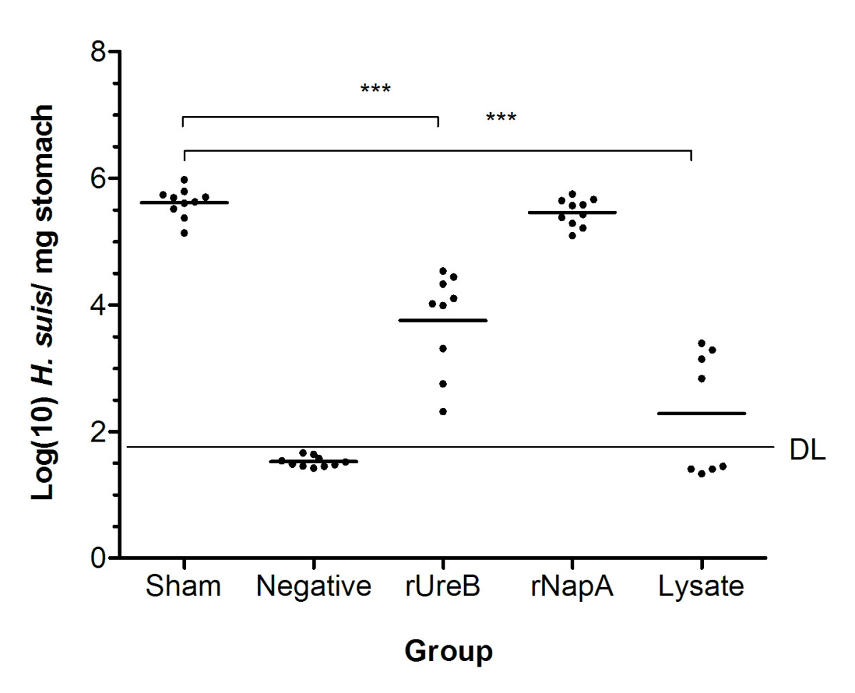 http://static-content.springer.com/image/art%3A10.1186%2F1297-9716-43-72/MediaObjects/13567_2012_Article_199_Fig3_HTML.jpg