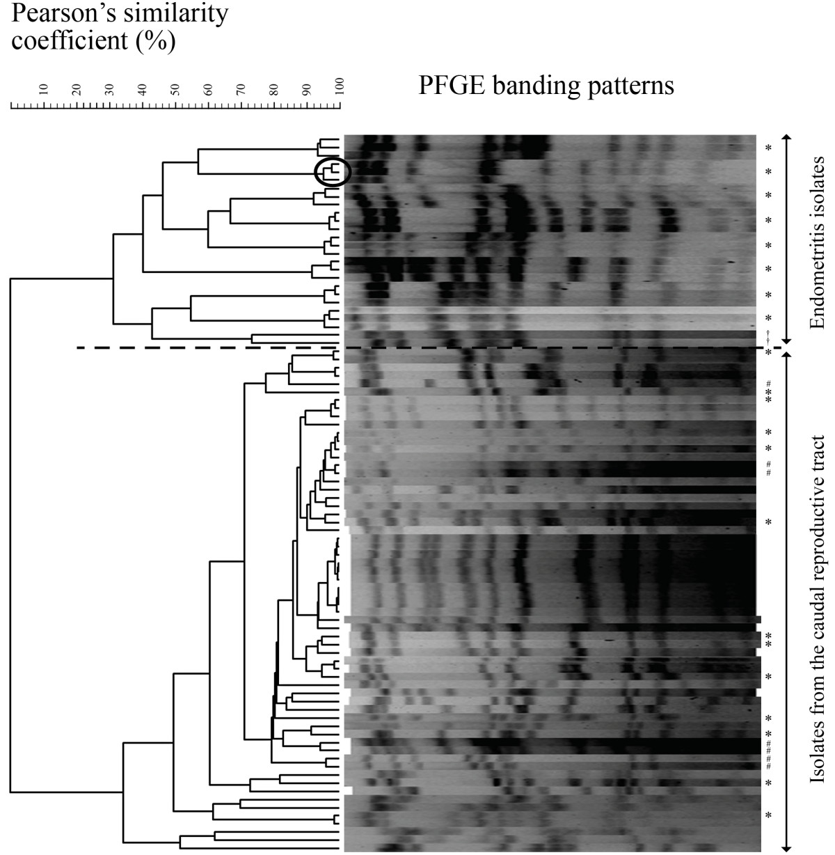 http://static-content.springer.com/image/art%3A10.1186%2F1297-9716-44-26/MediaObjects/13567_2012_Article_233_Fig1_HTML.jpg