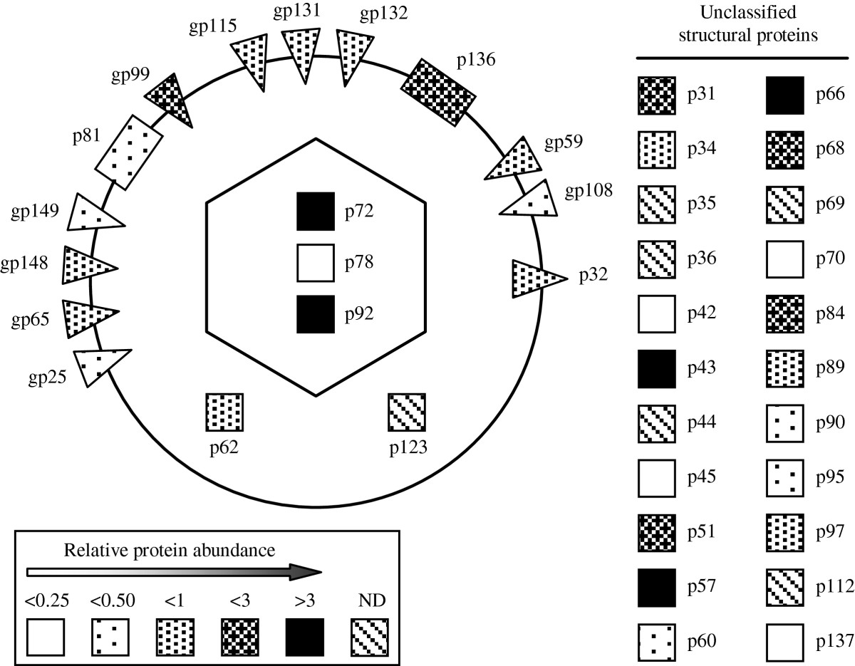 http://static-content.springer.com/image/art%3A10.1186%2F1297-9716-44-85/MediaObjects/13567_2013_Article_454_Fig3_HTML.jpg