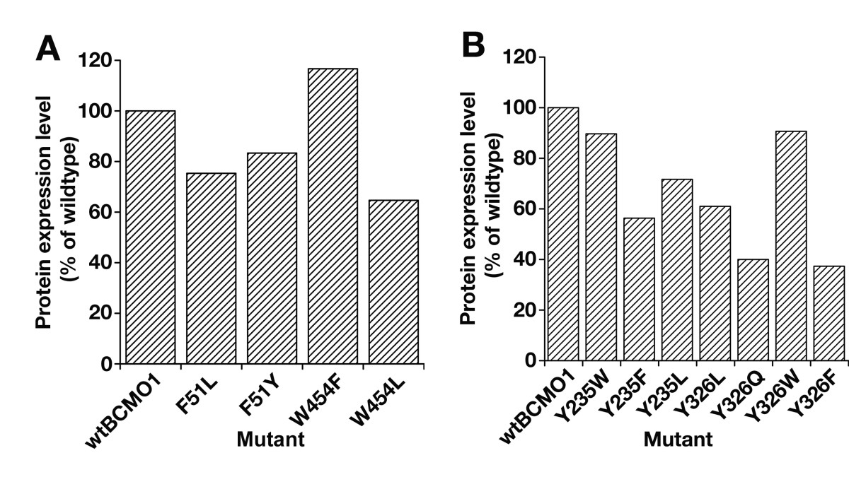 http://static-content.springer.com/image/art%3A10.1186%2F1471-2091-10-31/MediaObjects/12858_2009_Article_257_Fig4_HTML.jpg