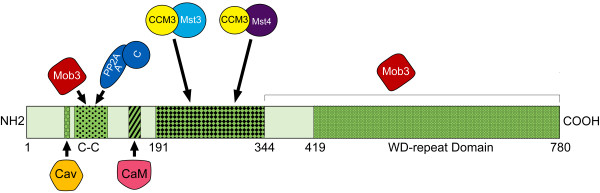 http://static-content.springer.com/image/art%3A10.1186%2F1471-2091-12-54/MediaObjects/12858_2011_365_Fig10_HTML.jpg