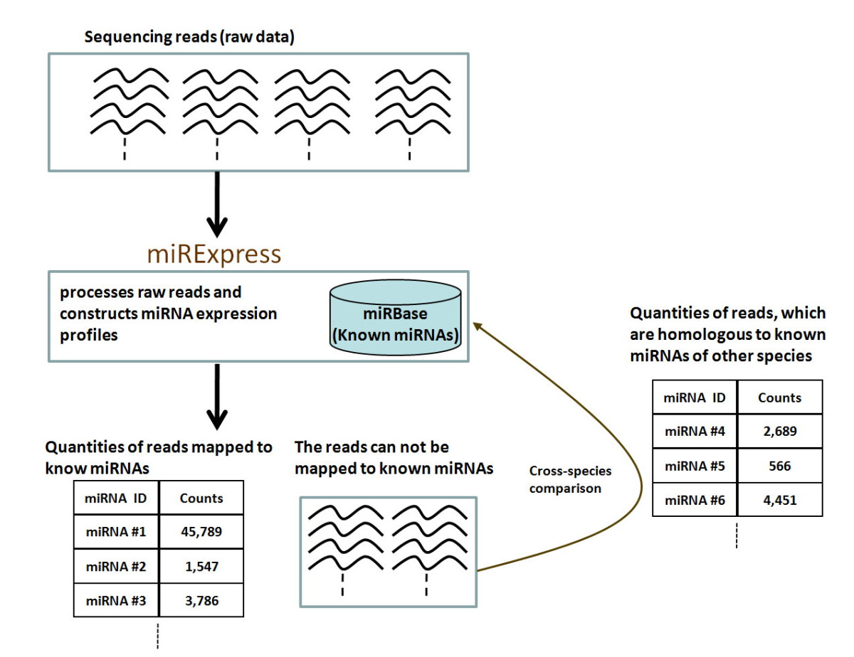 http://static-content.springer.com/image/art%3A10.1186%2F1471-2105-10-328/MediaObjects/12859_2009_Article_3058_Fig1_HTML.jpg