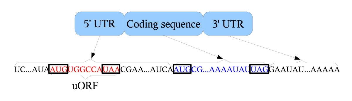 http://static-content.springer.com/image/art%3A10.1186%2F1471-2105-10-451/MediaObjects/12859_2008_Article_3181_Fig1_HTML.jpg