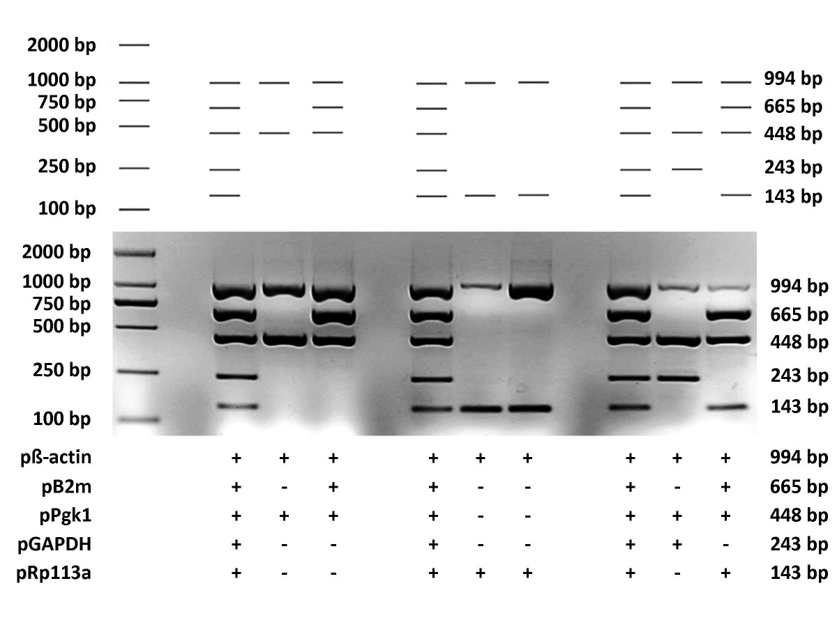http://static-content.springer.com/image/art%3A10.1186%2F1471-2105-11-143/MediaObjects/12859_2009_Article_3600_Fig4_HTML.jpg