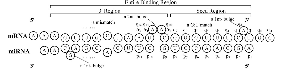 http://static-content.springer.com/image/art%3A10.1186%2F1471-2105-11-476/MediaObjects/12859_2010_Article_3933_Fig2_HTML.jpg