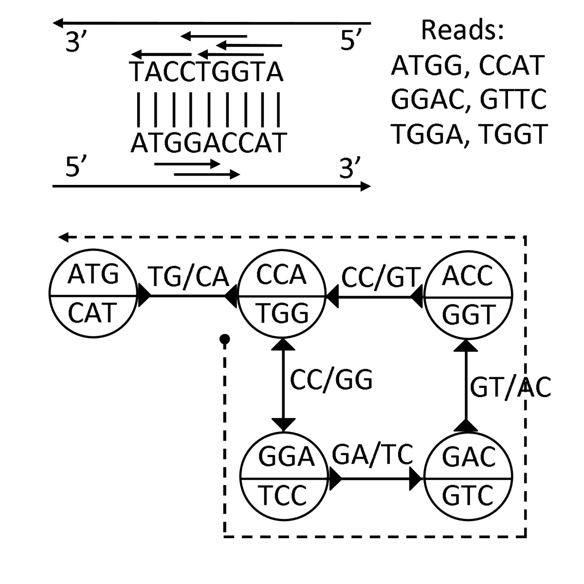 http://static-content.springer.com/image/art%3A10.1186%2F1471-2105-11-560/MediaObjects/12859_2010_Article_4143_Fig2_HTML.jpg