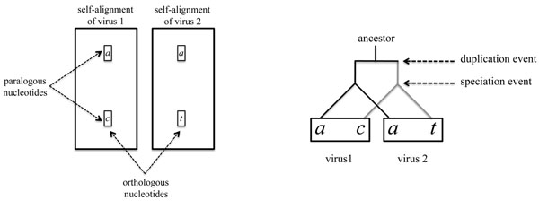 http://static-content.springer.com/image/art%3A10.1186%2F1471-2105-12-S9-S10/MediaObjects/12859_2011_4817_Fig7_HTML.jpg