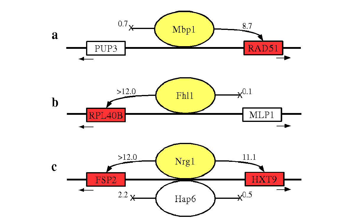 http://static-content.springer.com/image/art%3A10.1186%2F1471-2105-5-31/MediaObjects/12859_2003_Article_147_Fig3_HTML.jpg