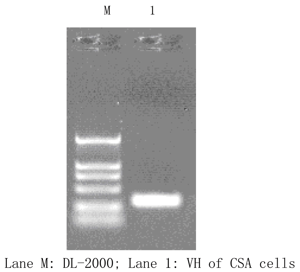 http://static-content.springer.com/image/art%3A10.1186%2F1471-2105-7-S4-S9/MediaObjects/12859_2006_Article_1332_Fig1_HTML.jpg