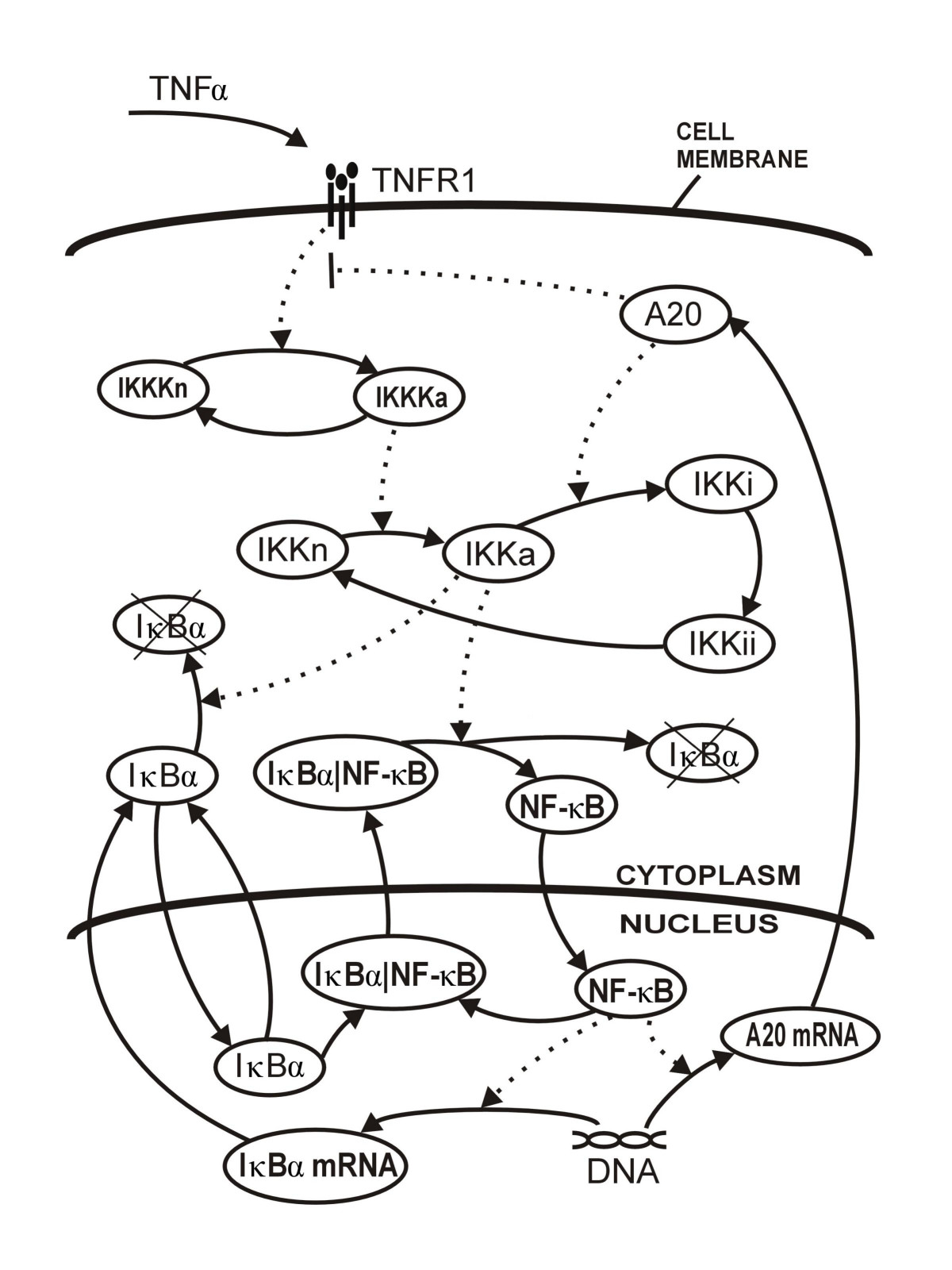 http://static-content.springer.com/image/art%3A10.1186%2F1471-2105-8-376/MediaObjects/12859_2007_Article_1748_Fig1_HTML.jpg