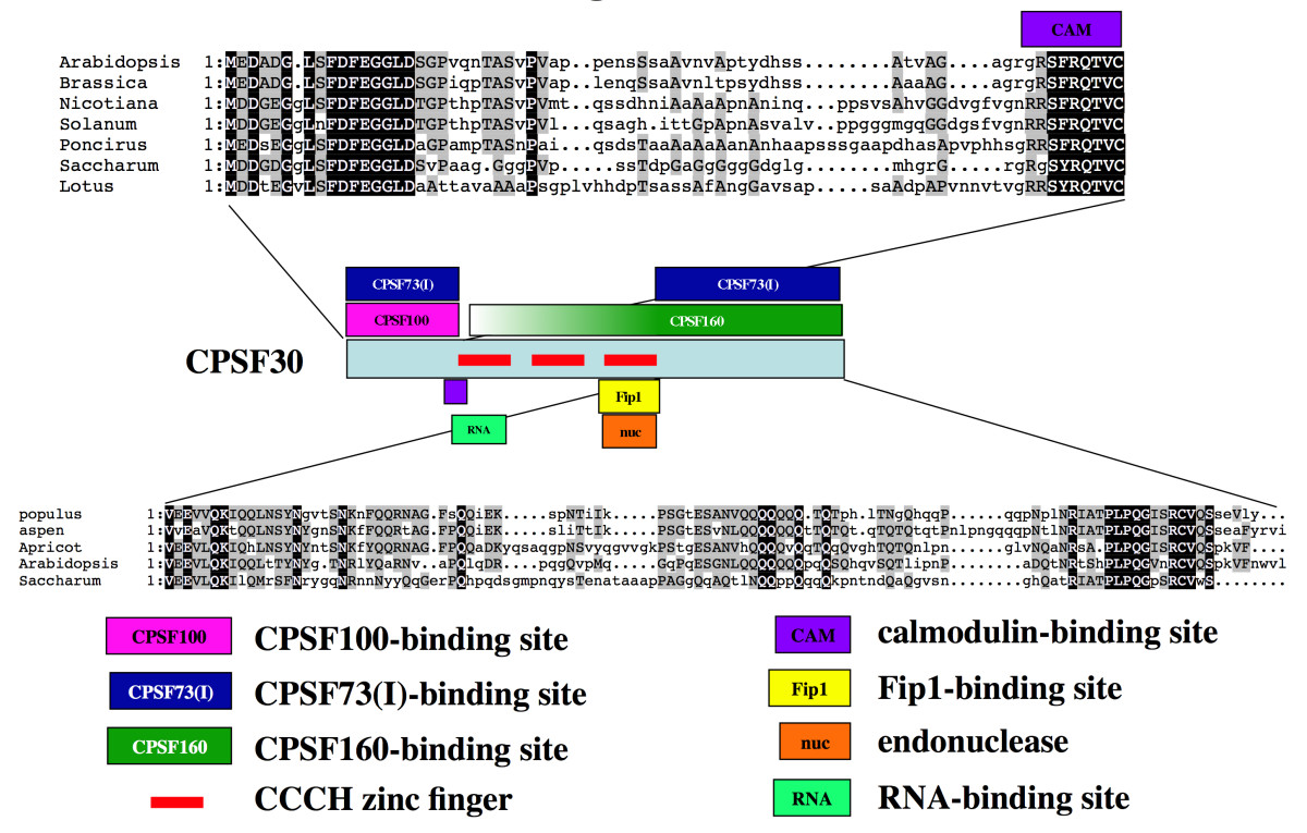 http://static-content.springer.com/image/art%3A10.1186%2F1471-2121-10-51/MediaObjects/12860_2008_Article_400_Fig7_HTML.jpg