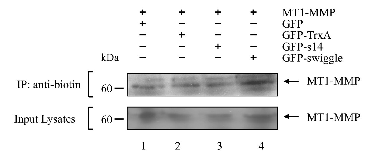 http://static-content.springer.com/image/art%3A10.1186%2F1471-2121-11-58/MediaObjects/12860_2009_Article_503_Fig4_HTML.jpg