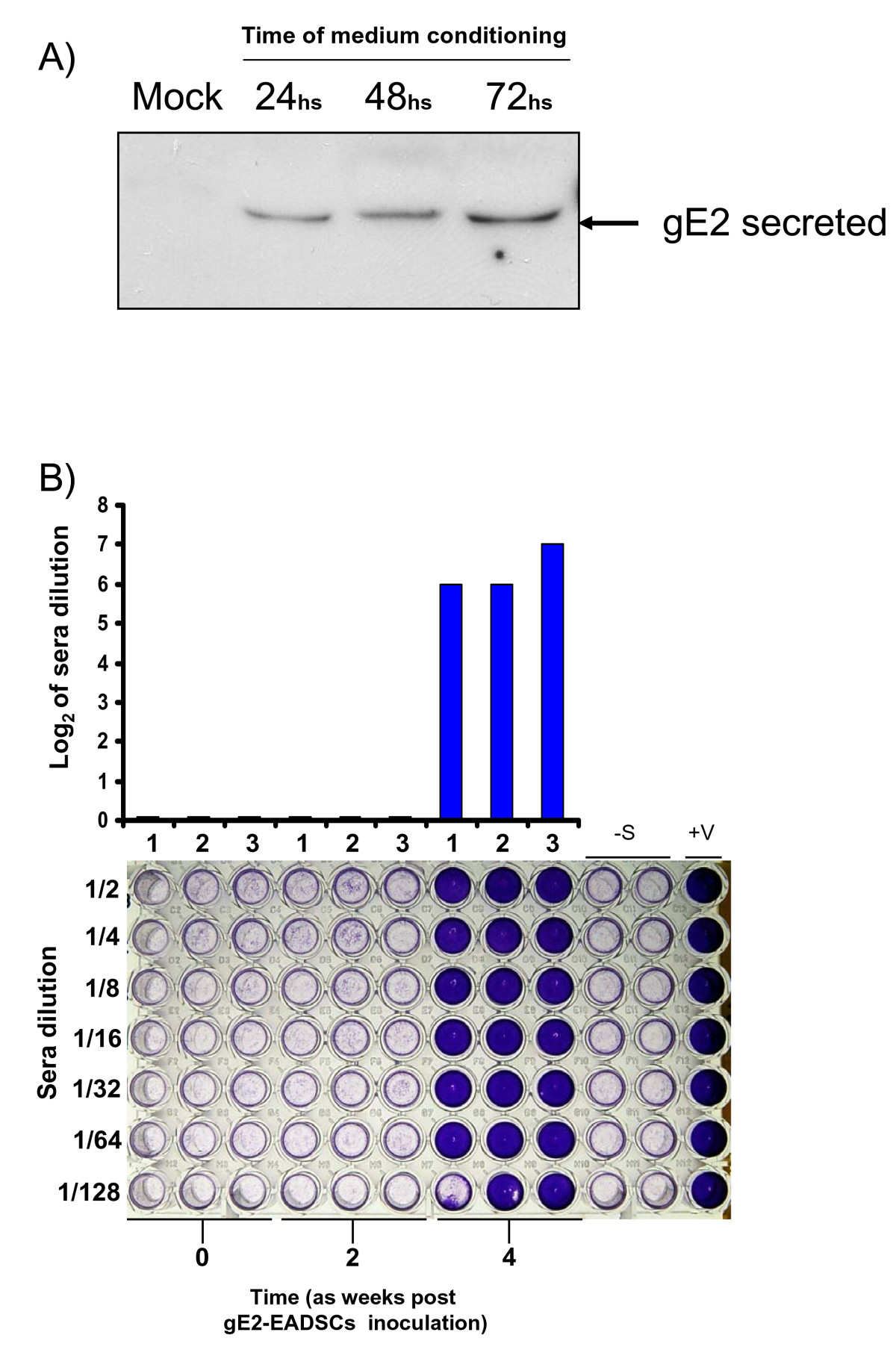 http://static-content.springer.com/image/art%3A10.1186%2F1471-2121-11-73/MediaObjects/12860_2010_Article_518_Fig7_HTML.jpg
