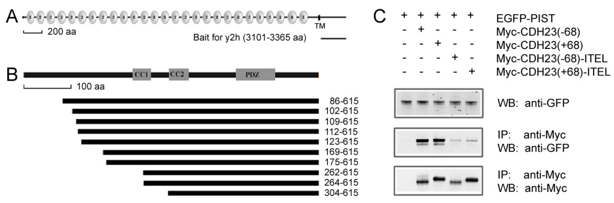 http://static-content.springer.com/image/art%3A10.1186%2F1471-2121-11-80/MediaObjects/12860_2010_Article_525_Fig1_HTML.jpg
