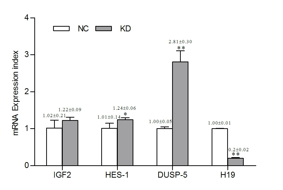 http://static-content.springer.com/image/art%3A10.1186%2F1471-2121-14-26/MediaObjects/12860_2013_Article_662_Fig4_HTML.jpg