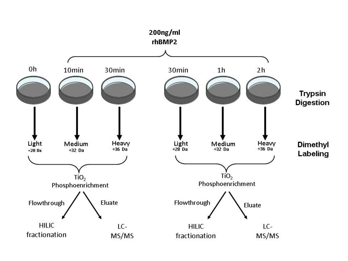 http://static-content.springer.com/image/art%3A10.1186%2F1471-2121-14-47/MediaObjects/12860_2013_Article_684_Fig1_HTML.jpg