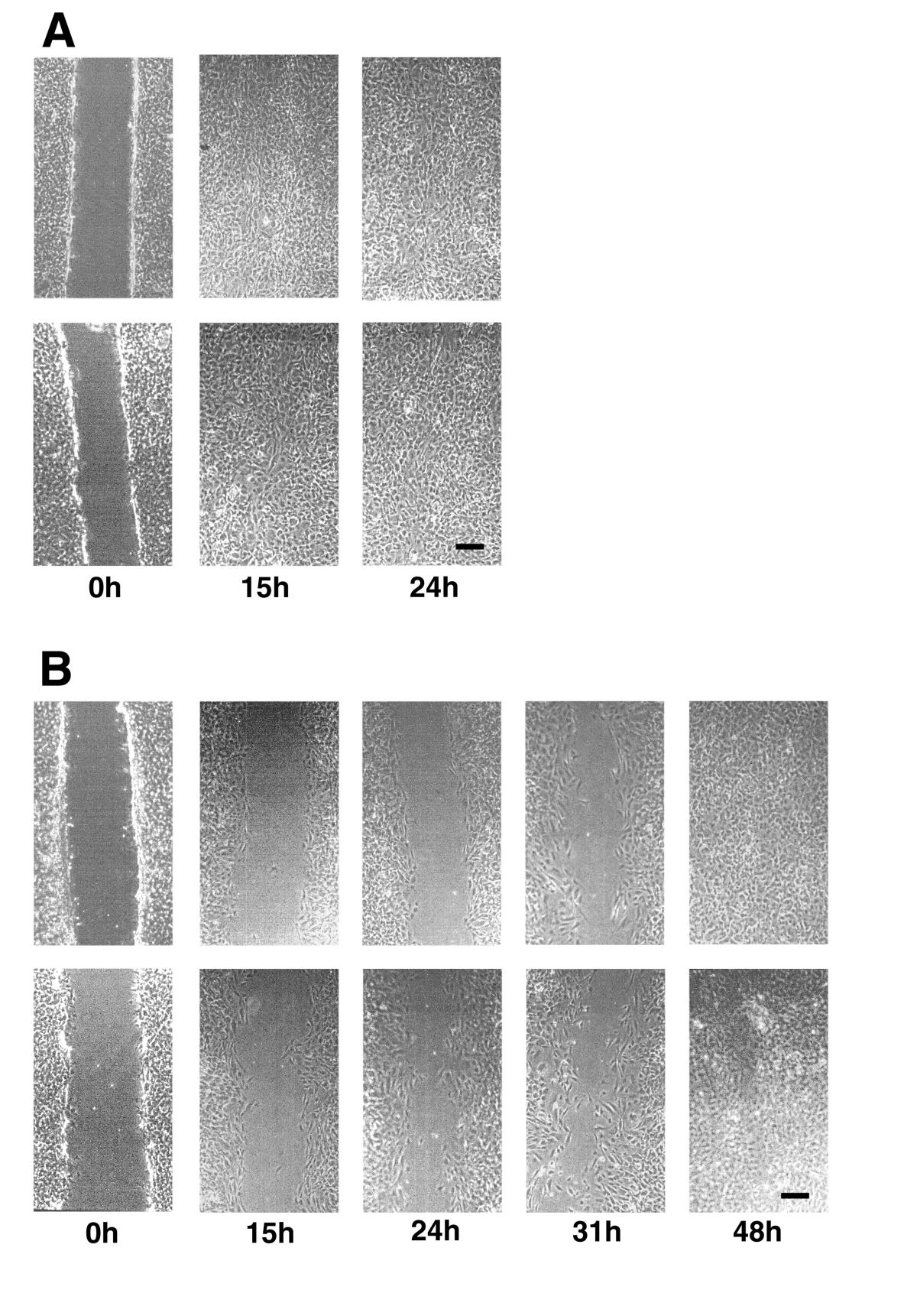 http://static-content.springer.com/image/art%3A10.1186%2F1471-2121-2-15/MediaObjects/12860_2001_Article_19_Fig4_HTML.jpg