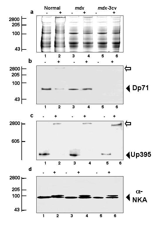 http://static-content.springer.com/image/art%3A10.1186%2F1471-2121-2-2/MediaObjects/12860_2000_Article_6_Fig8_HTML.jpg