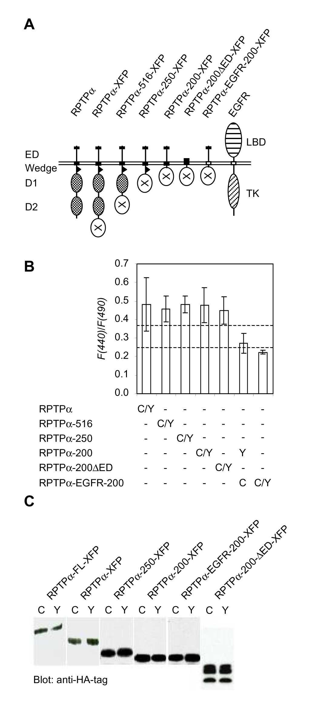 http://static-content.springer.com/image/art%3A10.1186%2F1471-2121-2-8/MediaObjects/12860_2001_Article_12_Fig5_HTML.jpg
