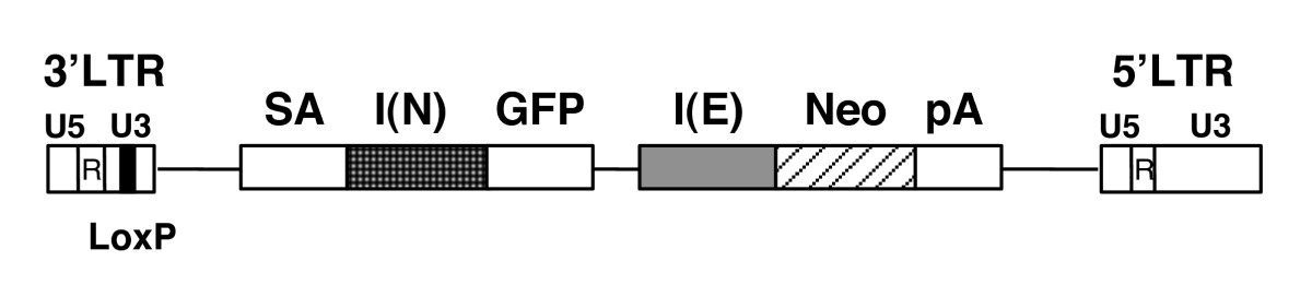 http://static-content.springer.com/image/art%3A10.1186%2F1471-2121-8-37/MediaObjects/12860_2007_Article_37_Fig1_HTML.jpg
