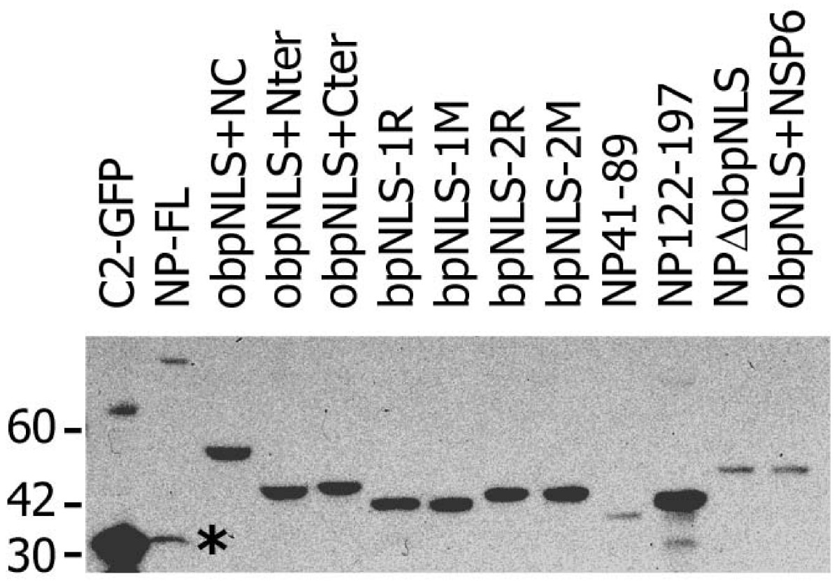 http://static-content.springer.com/image/art%3A10.1186%2F1471-2121-9-22/MediaObjects/12860_2007_Article_300_Fig4_HTML.jpg