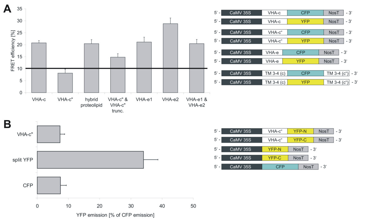 http://static-content.springer.com/image/art%3A10.1186%2F1471-2121-9-28/MediaObjects/12860_2007_Article_306_Fig4_HTML.jpg