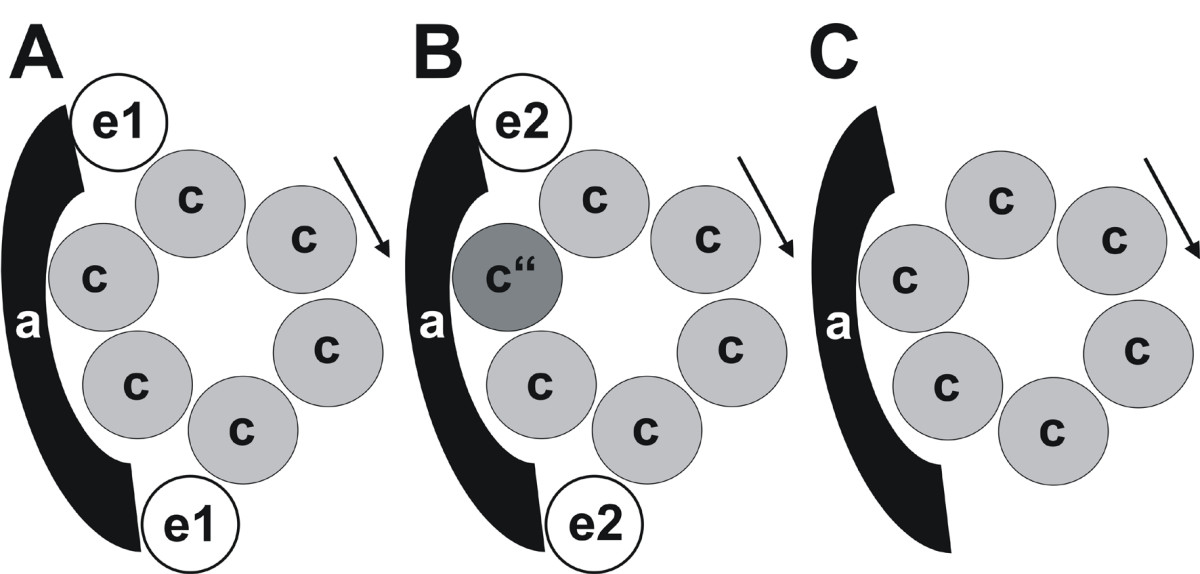 http://static-content.springer.com/image/art%3A10.1186%2F1471-2121-9-28/MediaObjects/12860_2007_Article_306_Fig7_HTML.jpg