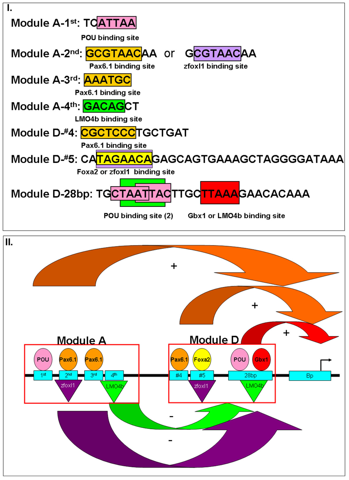 http://static-content.springer.com/image/art%3A10.1186%2F1471-213X-10-35/MediaObjects/12861_2009_Article_512_Fig9_HTML.jpg