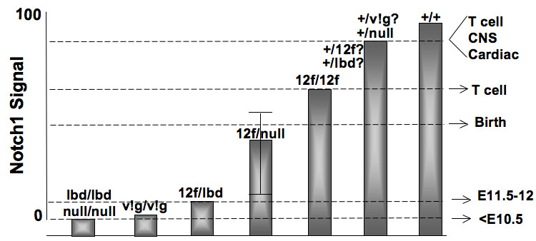 http://static-content.springer.com/image/art%3A10.1186%2F1471-213X-10-36/MediaObjects/12861_2009_Article_513_Fig7_HTML.jpg