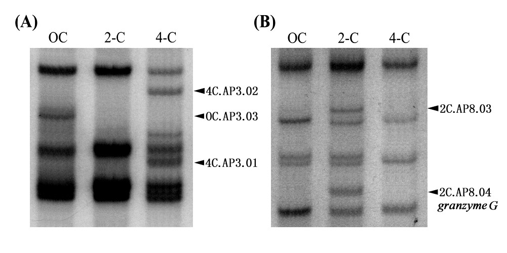 http://static-content.springer.com/image/art%3A10.1186%2F1471-213X-10-88/MediaObjects/12861_2009_Article_565_Fig1_HTML.jpg