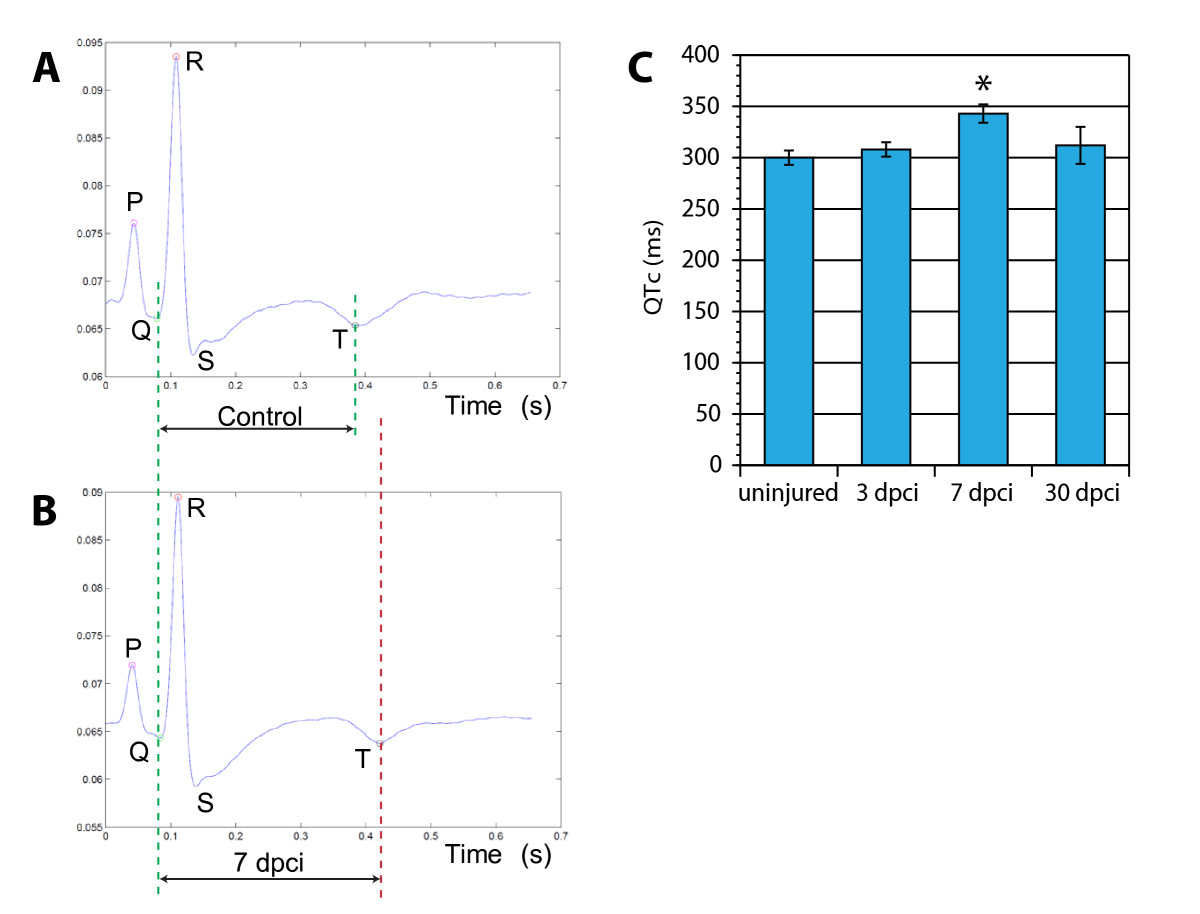 http://static-content.springer.com/image/art%3A10.1186%2F1471-213X-11-21/MediaObjects/12861_2011_Article_620_Fig8_HTML.jpg