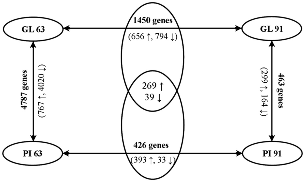 http://static-content.springer.com/image/art%3A10.1186%2F1471-213X-12-13/MediaObjects/12861_2011_Article_706_Fig1_HTML.jpg