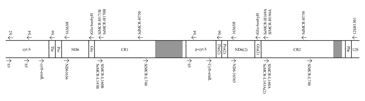 http://static-content.springer.com/image/art%3A10.1186%2F1471-2148-10-14/MediaObjects/12862_2009_Article_1230_Fig1_HTML.jpg