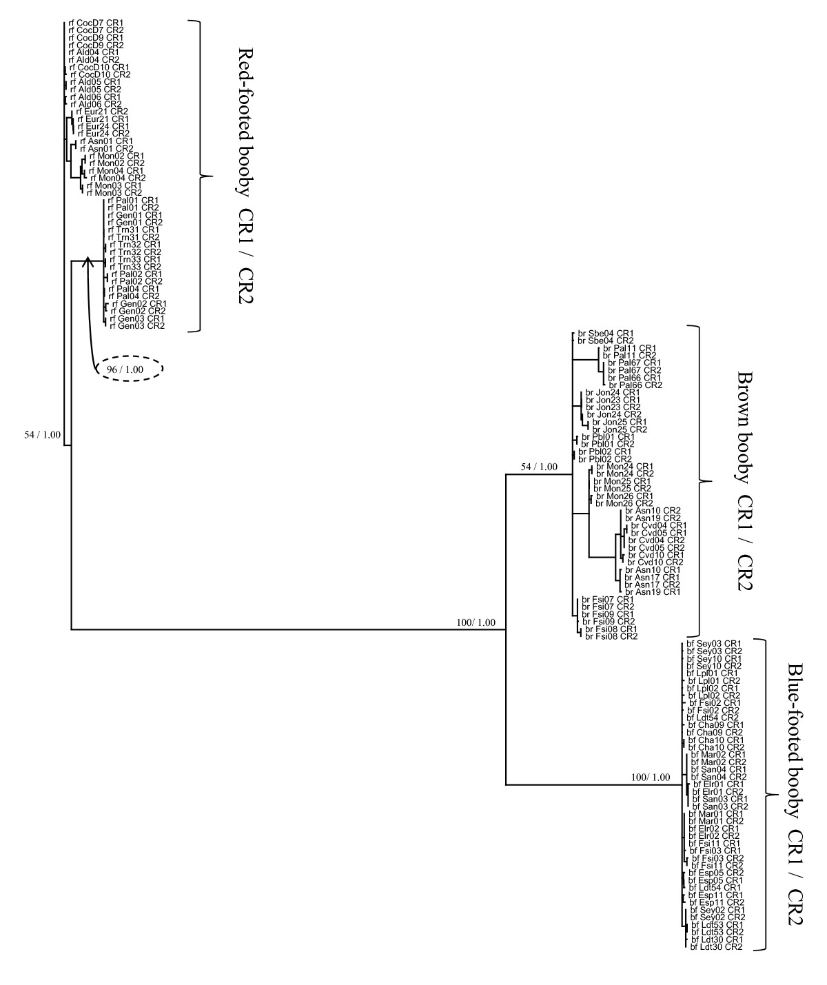 http://static-content.springer.com/image/art%3A10.1186%2F1471-2148-10-14/MediaObjects/12862_2009_Article_1230_Fig2_HTML.jpg