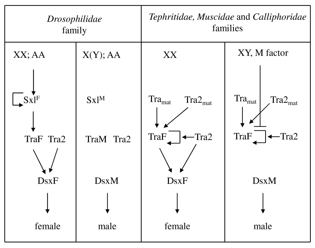 http://static-content.springer.com/image/art%3A10.1186%2F1471-2148-10-140/MediaObjects/12862_2010_Article_1356_Fig6_HTML.jpg