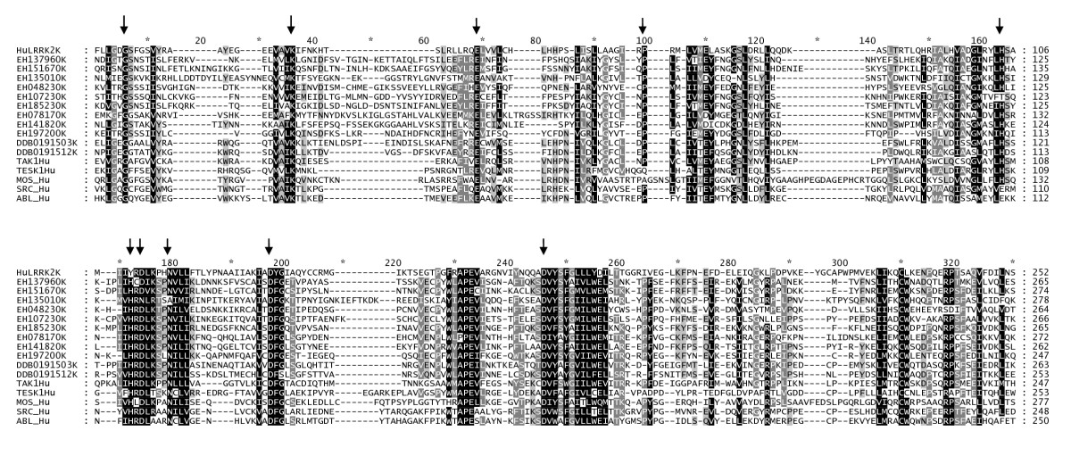 http://static-content.springer.com/image/art%3A10.1186%2F1471-2148-10-196/MediaObjects/12862_2009_Article_1412_Fig5_HTML.jpg