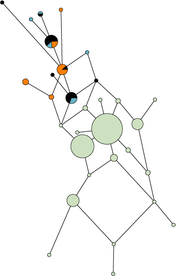 http://static-content.springer.com/image/art%3A10.1186%2F1471-2148-10-25/MediaObjects/12862_2009_Article_1241_Fig4_HTML.jpg