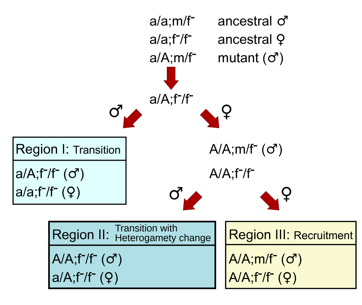 http://static-content.springer.com/image/art%3A10.1186%2F1471-2148-10-388/MediaObjects/12862_2010_Article_1603_Fig1_HTML.jpg