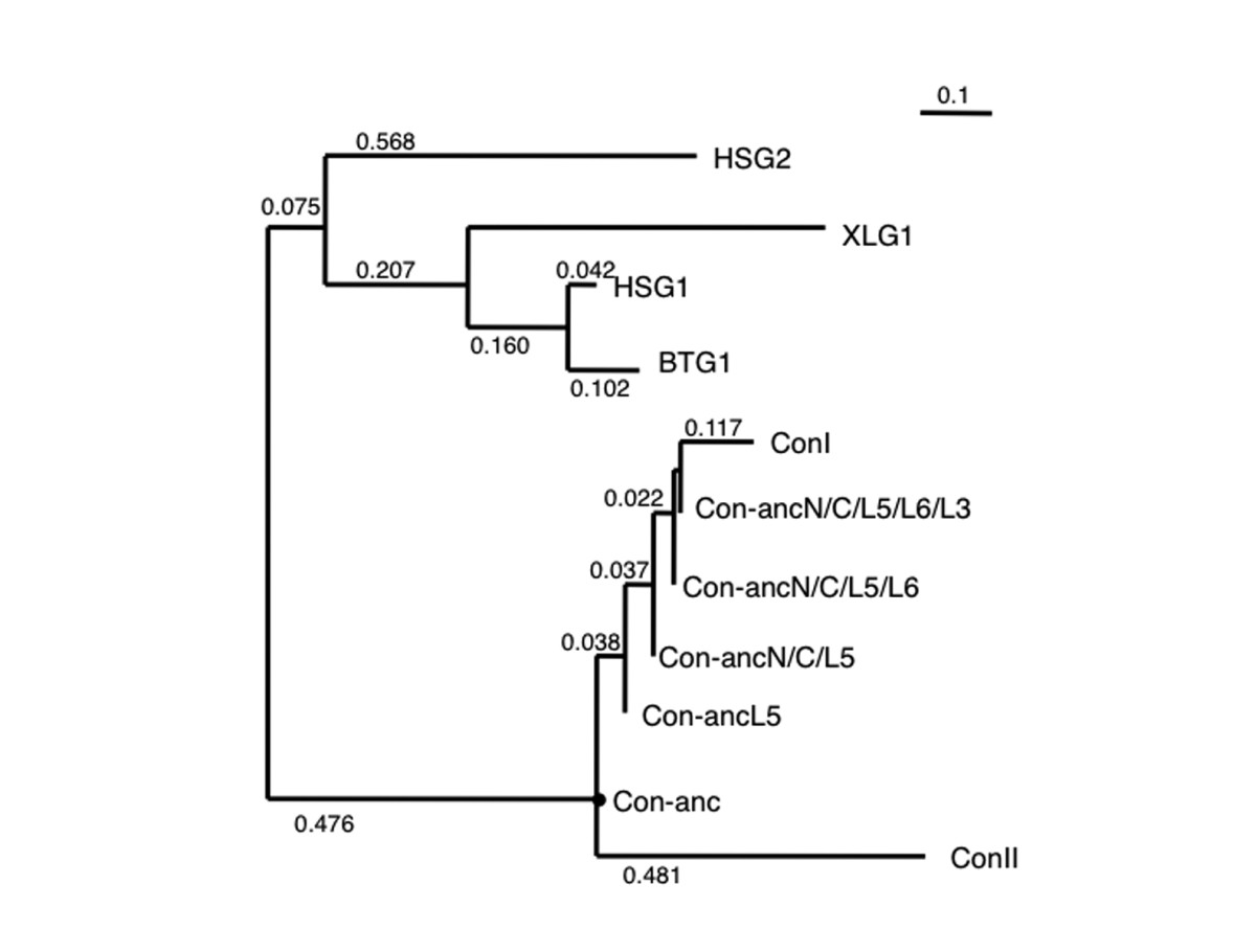 http://static-content.springer.com/image/art%3A10.1186%2F1471-2148-10-43/MediaObjects/12862_2009_Article_1259_Fig2_HTML.jpg