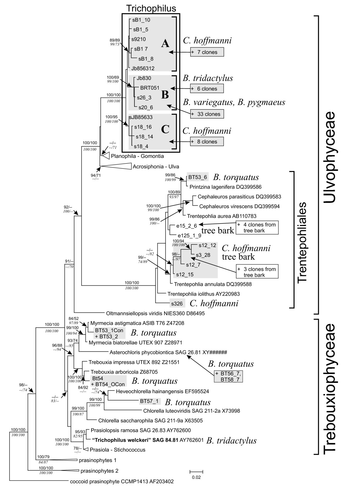 http://static-content.springer.com/image/art%3A10.1186%2F1471-2148-10-86/MediaObjects/12862_2009_Article_1302_Fig4_HTML.jpg