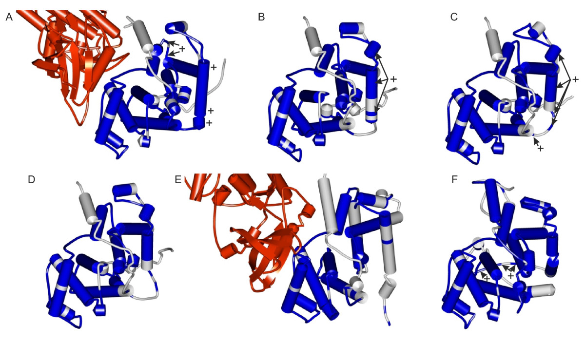 http://static-content.springer.com/image/art%3A10.1186%2F1471-2148-11-224/MediaObjects/12862_2011_1832_Fig5_HTML.jpg