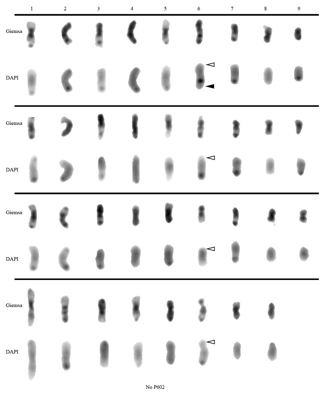 http://static-content.springer.com/image/art%3A10.1186%2F1471-2148-11-289/MediaObjects/12862_2011_1883_Fig7_HTML.jpg