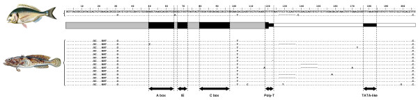 http://static-content.springer.com/image/art%3A10.1186%2F1471-2148-12-201/MediaObjects/12862_2012_2184_Fig3_HTML.jpg