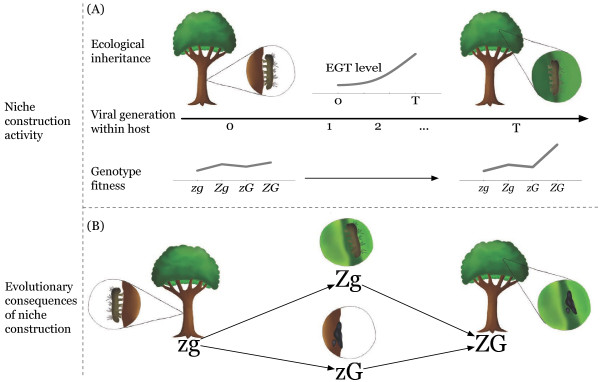 http://static-content.springer.com/image/art%3A10.1186%2F1471-2148-13-170/MediaObjects/12862_2013_2407_Fig1_HTML.jpg