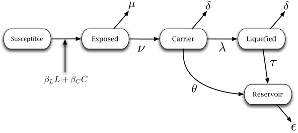 http://static-content.springer.com/image/art%3A10.1186%2F1471-2148-13-170/MediaObjects/12862_2013_2407_Fig2_HTML.jpg