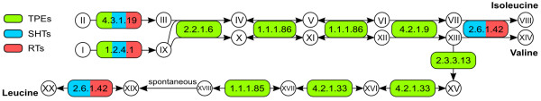 http://static-content.springer.com/image/art%3A10.1186%2F1471-2148-13-190/MediaObjects/12862_2013_2420_Fig4_HTML.jpg