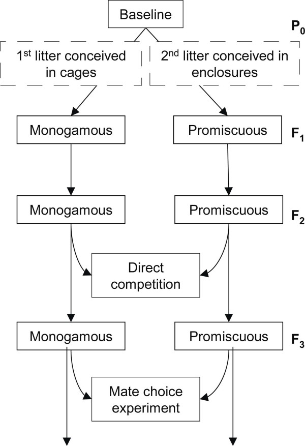 http://static-content.springer.com/image/art%3A10.1186%2F1471-2148-13-81/MediaObjects/12862_2012_2319_Fig1_HTML.jpg