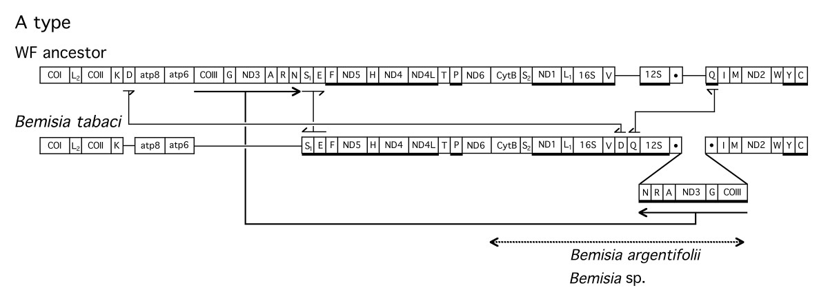 http://static-content.springer.com/image/art%3A10.1186%2F1471-2148-4-25/MediaObjects/12862_2004_Article_85_Fig3_HTML.jpg