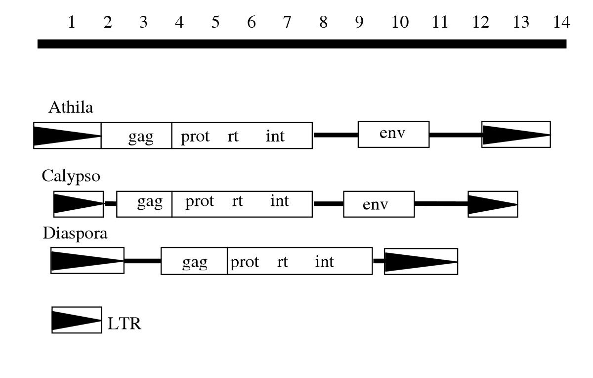 http://static-content.springer.com/image/art%3A10.1186%2F1471-2148-5-30/MediaObjects/12862_2004_Article_142_Fig6_HTML.jpg